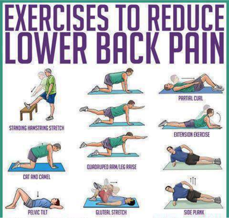 Lower Back Exercises Ease Your Lower Back Pain : reducebackpain from az-chiropractic.com size 750 x 715 png 712kB